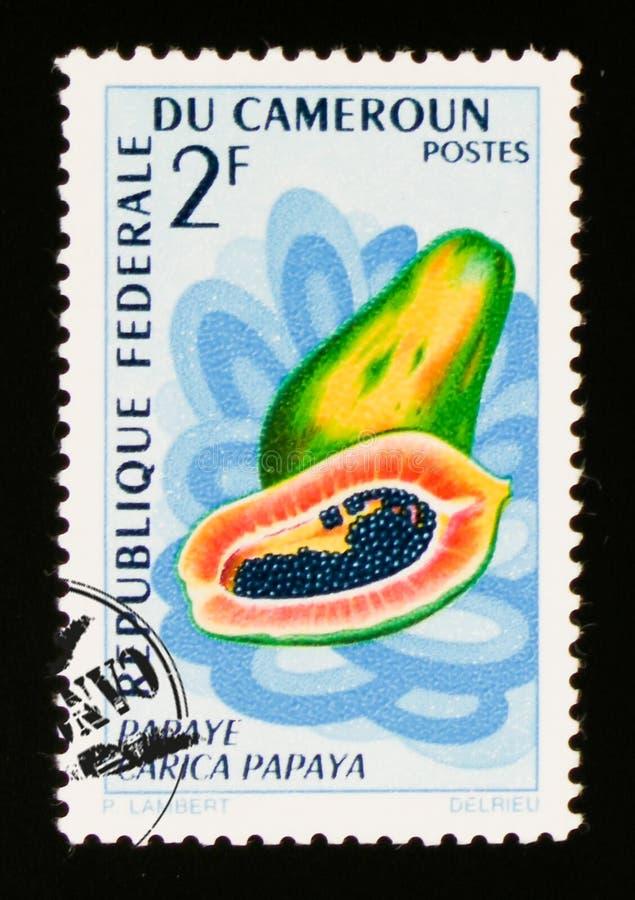Melonowiec owocowy Carica melonowiec około 1967, obrazy royalty free