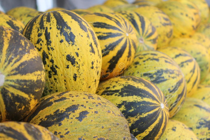 Download Melons stock image. Image of farming, agronomy, fruit - 25805973