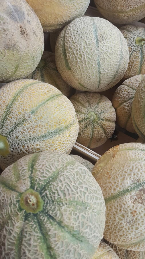 melons imagens de stock royalty free