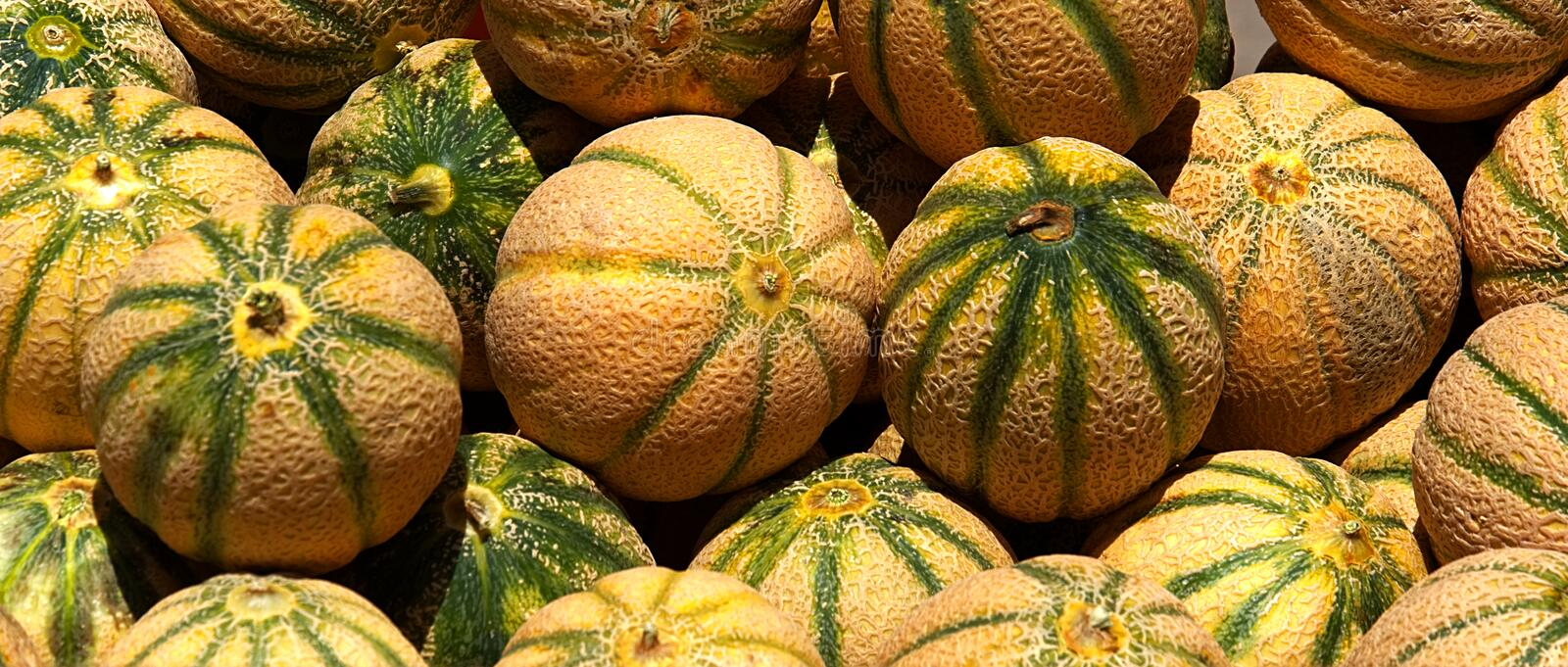 Melons 7795 images stock
