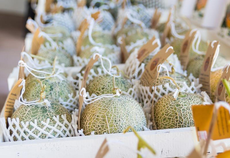 Melons on a market stall. Melons on a market stall,Japanese Melon royalty free stock image
