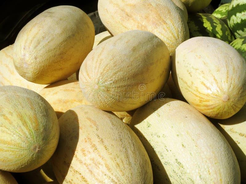 Melons oblongs jaunes de paille fra?che sur le march? photo stock