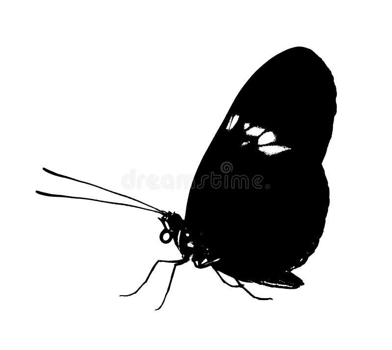 Melpomene comum preto de Heliconius da borboleta do carteiro isolado no fundo branco fotos de stock