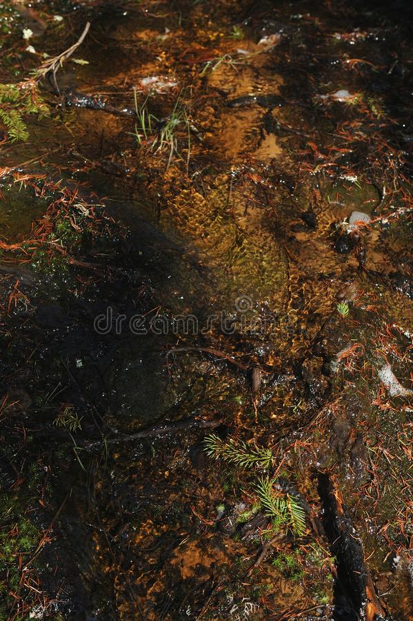 Melt water streams in coniferous forest. Melt water coming down from the hill down to the forest lake royalty free stock photo