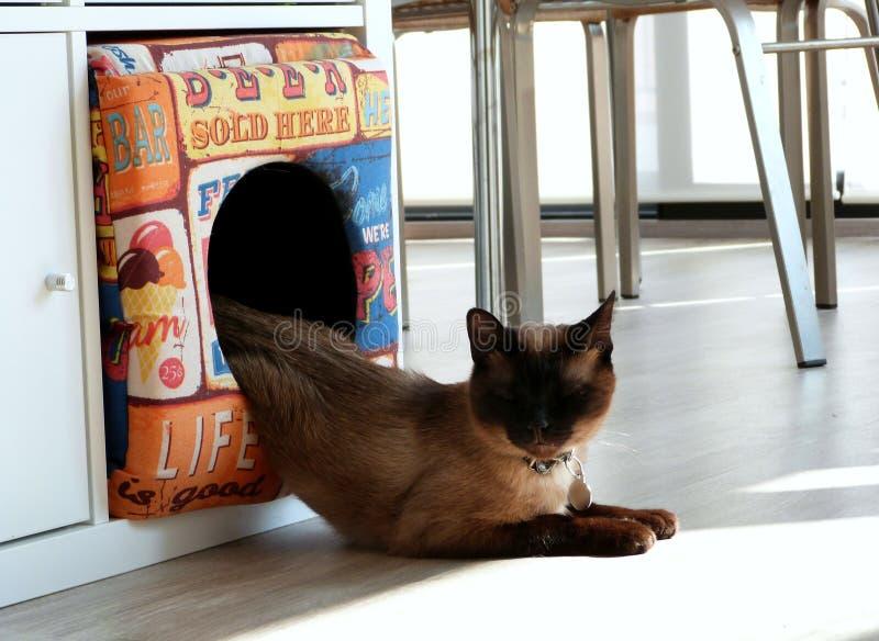 Melting Cat Free Public Domain Cc0 Image