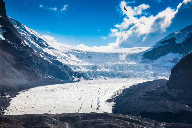 Melting Columbia Icefield. In Banff National Park, Canada. The surface of the glacier is covered with huge cracks stock image