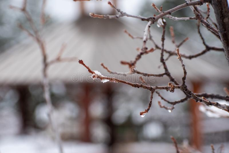 Melting ice on a bare tree branch royalty free stock photos