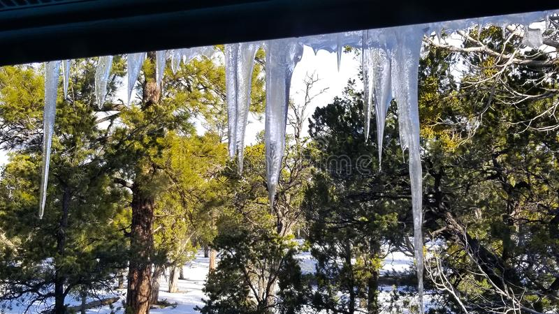 Melting icicles, dripping water with snowy ground and pine trees royalty free stock photography