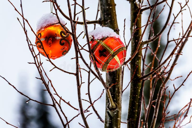 Melting Snow covering Red Christmas decoration that are hanging on tree branches royalty free stock photography