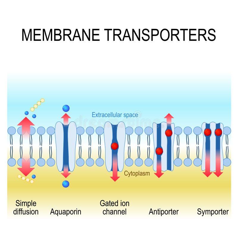 Membraanvervoerders Vector illustratie vector illustratie