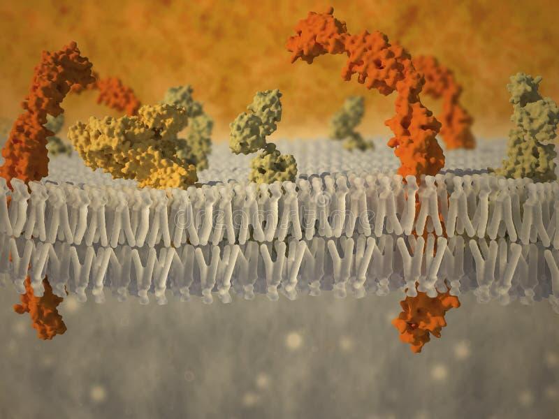 Membrana de plasma de uma pilha com proteínas associadas ilustração stock