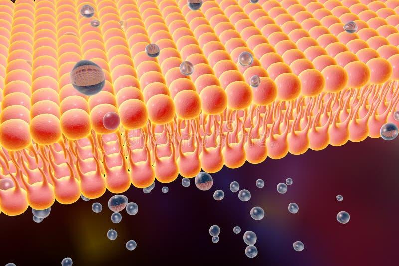 Membrane cellulaire avec la diffusion des molécules illustration stock