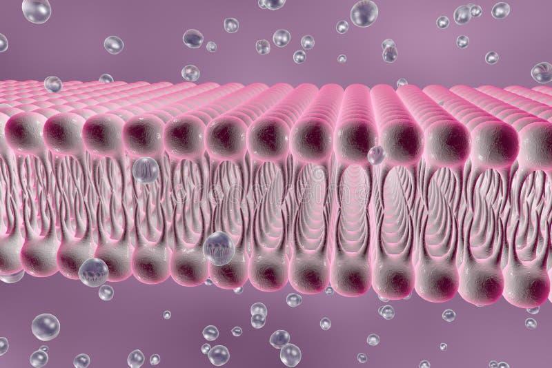 Membrane cellulaire avec la diffusion des molécules illustration de vecteur