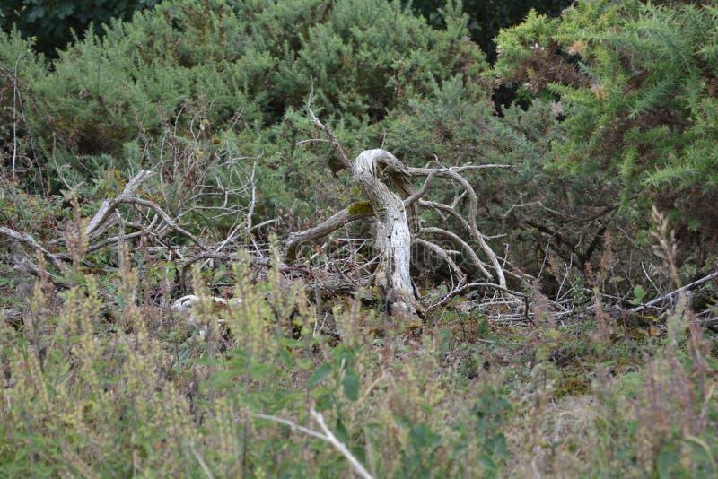 Membres d'arbre morts photographie stock libre de droits