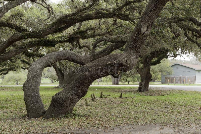 Membres de propagation d'it's d'arbre dans beaucoup de directions images stock