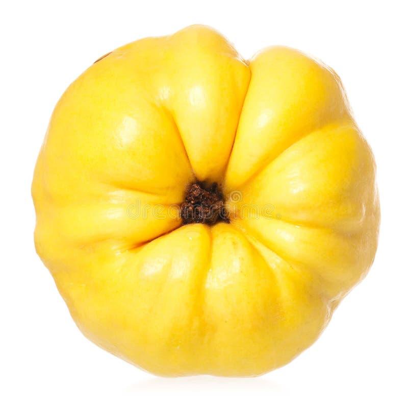 Membrillo amarillo fotografía de archivo libre de regalías