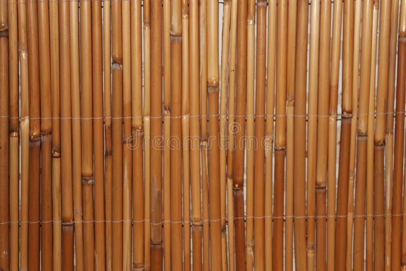 Membros de bambu em seguido fotografia de stock royalty free