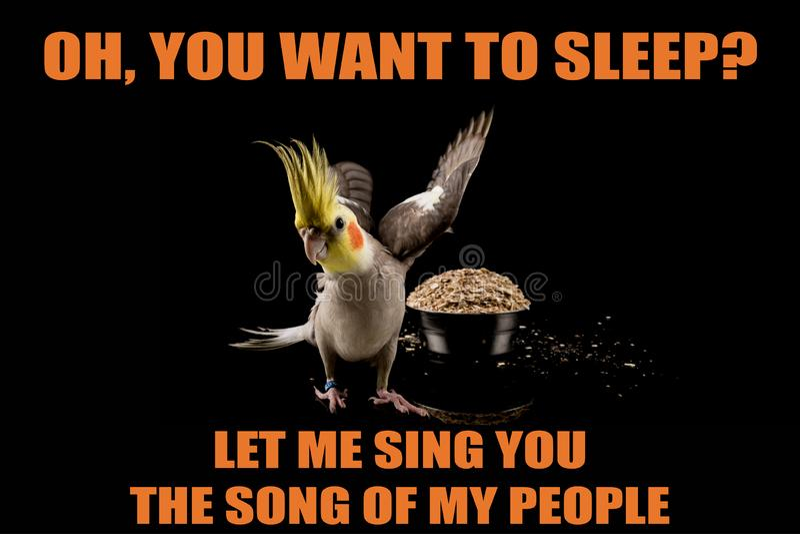 Meme drôle de perroquet, vous voulez dormir ? , Laissez-moi te chantent la chanson de mes personnes memes et citations frais photos libres de droits