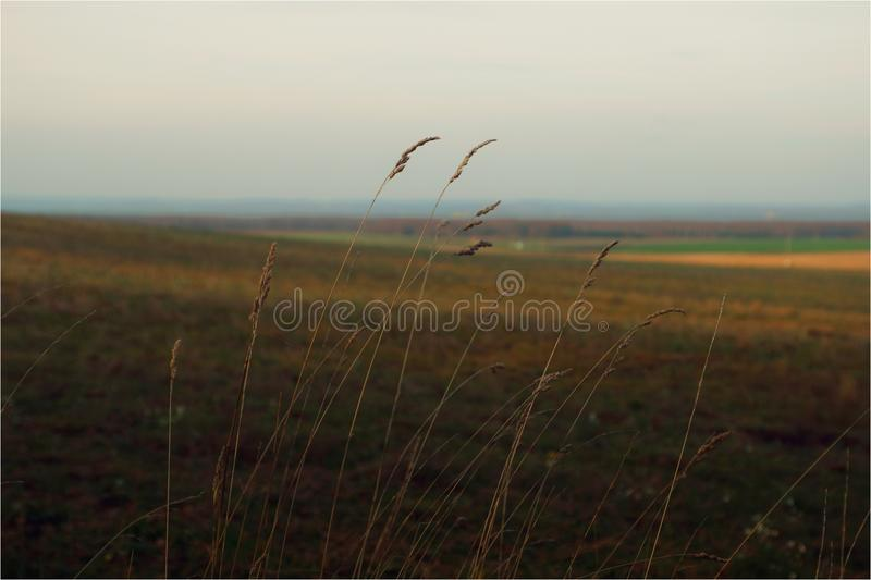 Memories of summer. The last days on the cool earth and long winter royalty free stock image