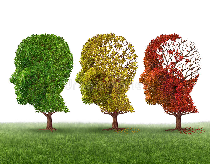 Memory Loss. And brain aging due to dementia and alzheimers disease as a medical icon of a group of color changing autumn fall trees shaped as a human head royalty free illustration