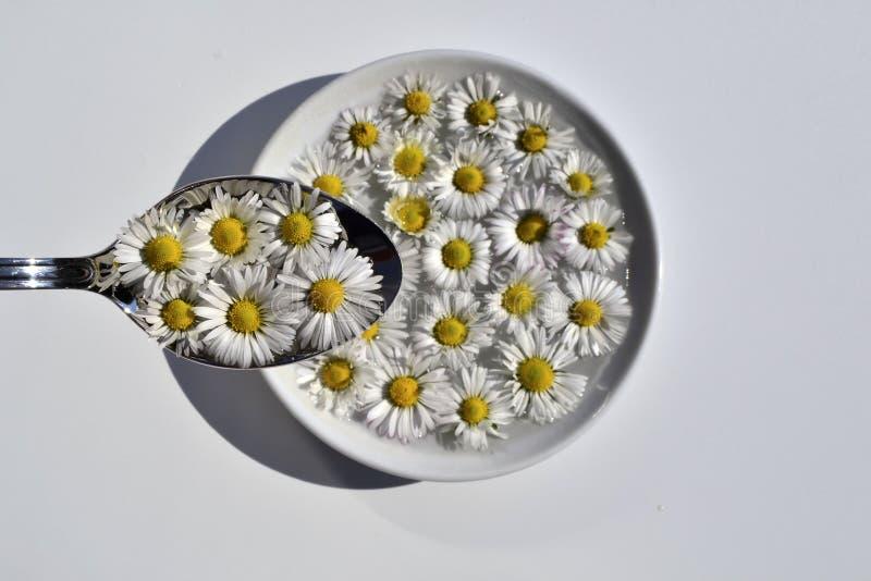 Menú de la primavera foto de archivo libre de regalías