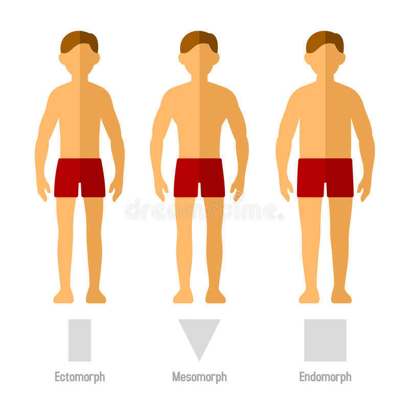Men Body Types royalty free illustration