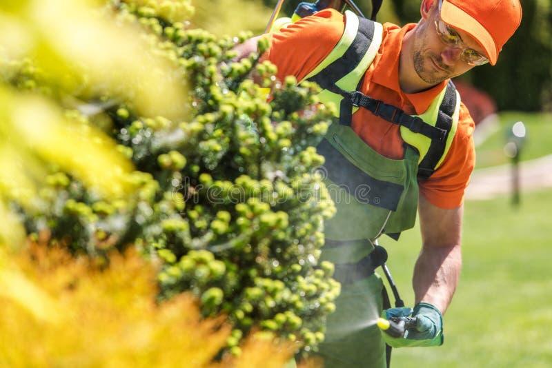 Men Fertilizing Inside Garden stock image
