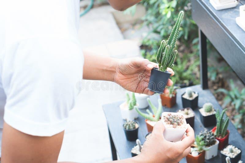 Men are gardening with cactus. stock photos