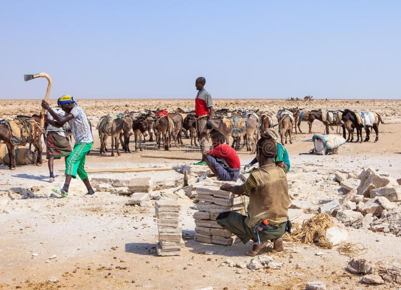 Men mining salt. In a very primitive way by chipping it from the ground, Danakil Depression, Ethiopia. January, 2018 royalty free stock image