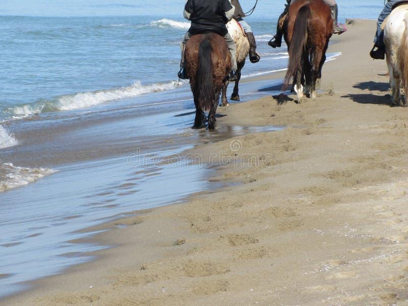 Men riding horses on the beach . Horseback riding on mediterranean coastline . Tuscany, Italy royalty free stock photos