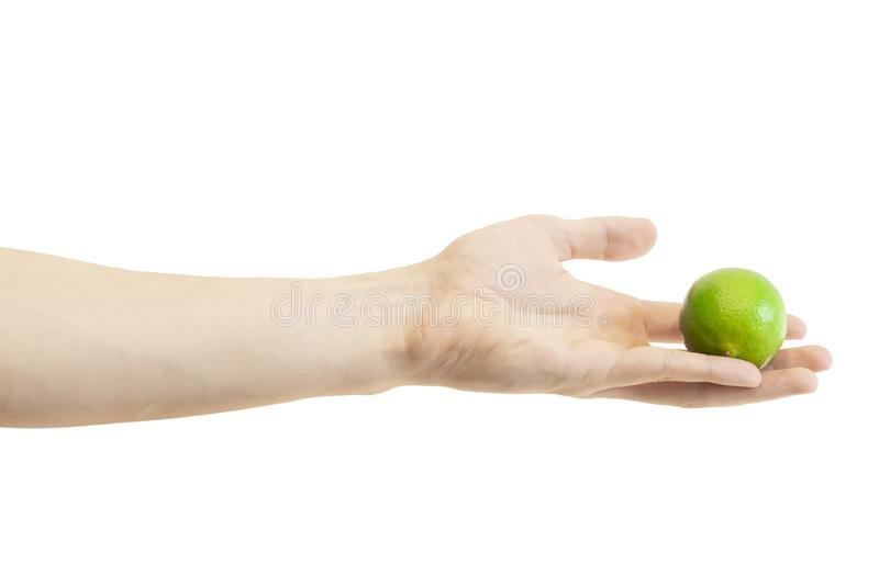 Men`s hand gives a whole lime isolated on white background. Juicy green lime. Male`s hand holds a lime. Сitrus stock photo