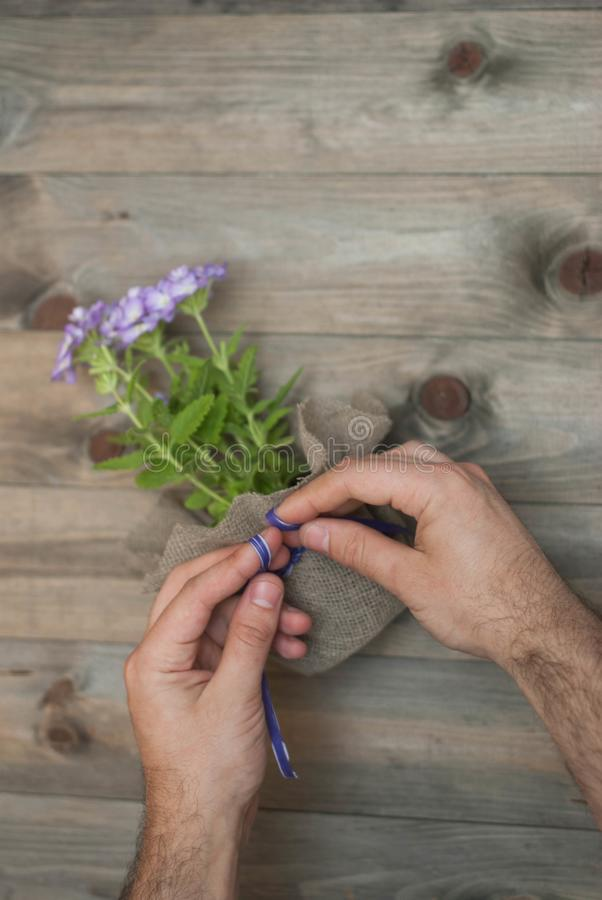 Men& x27;s Hands Tie Purple Bow on Flower Pot with Little Purple Flowers decorated with Burlap Fabric. Wooden Rustic Background. royalty free stock image