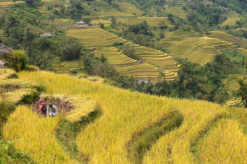 Men and Women cut rice terrace fields most beautiful in Ha Giang. Men and Women cut Rice terrace fields in Ha Giang,02 02apa, northwest Vietnam. China, indochina royalty free stock photos
