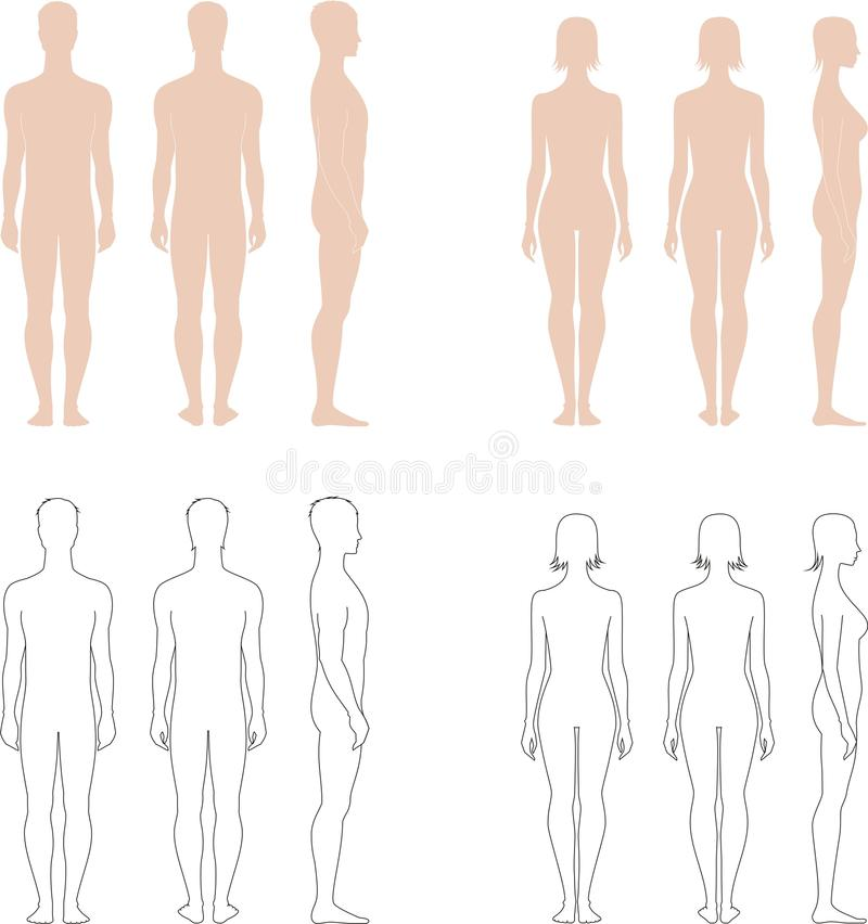 Men and women silhouettes. Vector illustration of mens and womens standart figures. Silhouettes vector illustration
