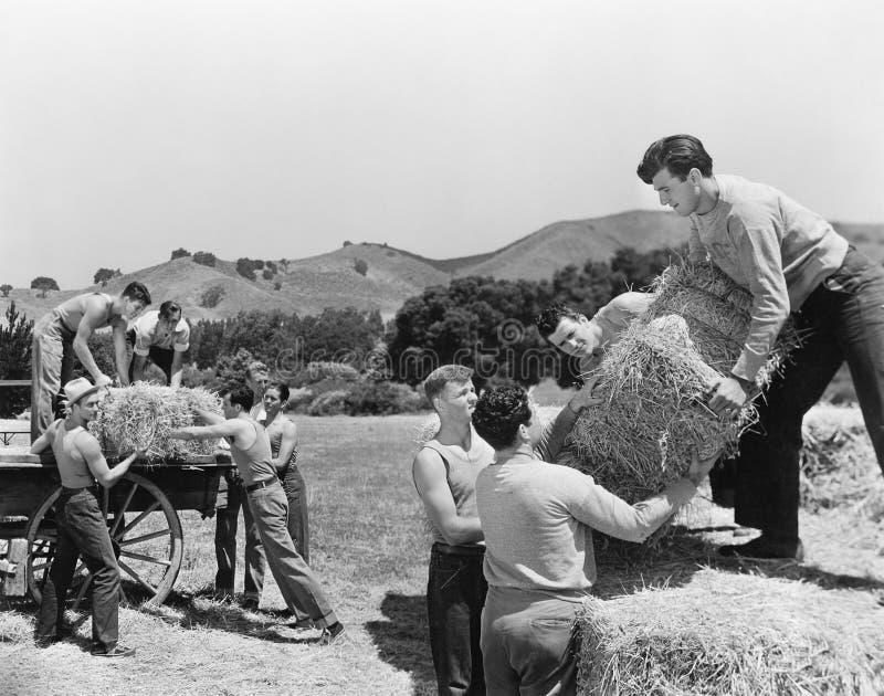 Men working on a farm loading hay stock photos