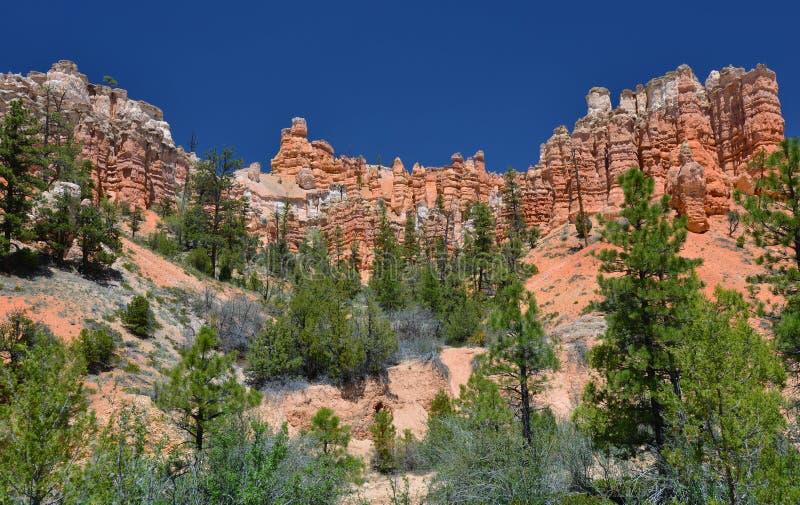 Menagrami muscosi della traccia dell'insenatura, parco nazionale del canyon del bryce, Utah, S.U.A. fotografia stock