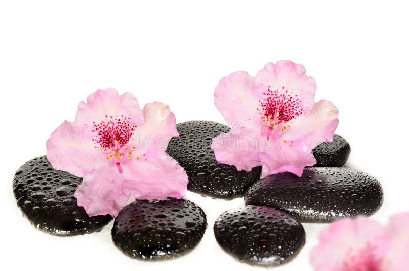 Menchia kwiaty i czerń kamienie Zdroju pojęcie obrazy royalty free