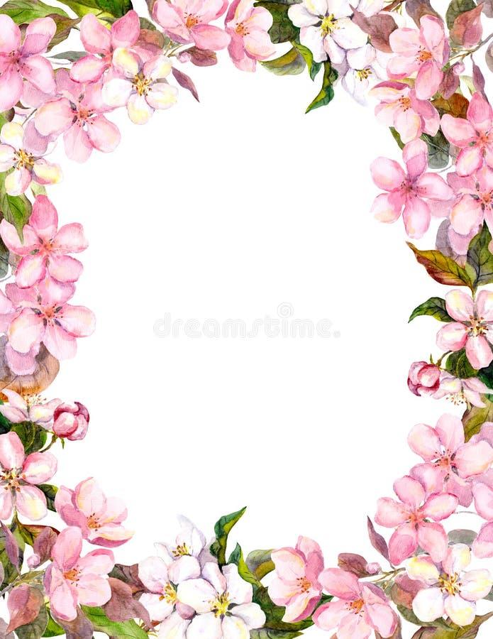 Menchia kwiaty - jabłko, czereśniowy okwitnięcie Kwiecista granica dla podławego tła akwarela ilustracja wektor