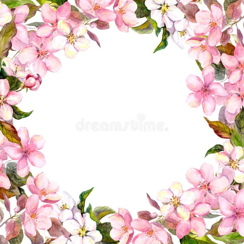 Menchia kwiaty - jabłko, czereśniowy okwitnięcie rama kwiecista wrobić serii watercolour ilustracji