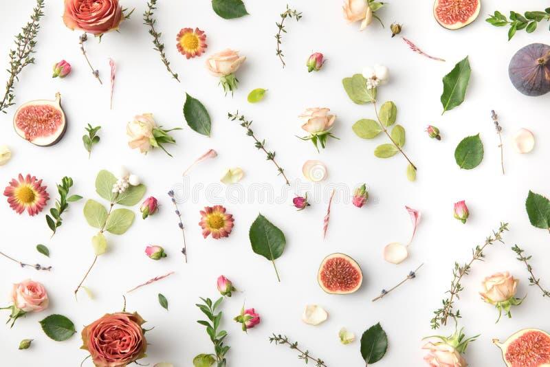 menchia kwitnie, płatki i figi fotografia stock