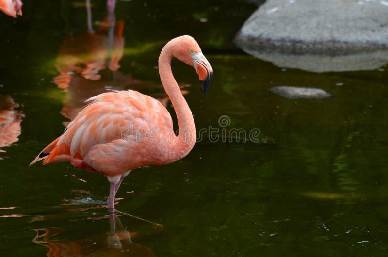 Menchia naprawdę jest mój ulubionym kolorem fotografia royalty free