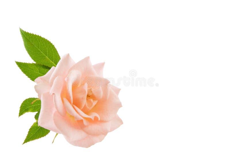 Download Menchie wzrastali obraz stock. Obraz złożonej z flory - 10737943