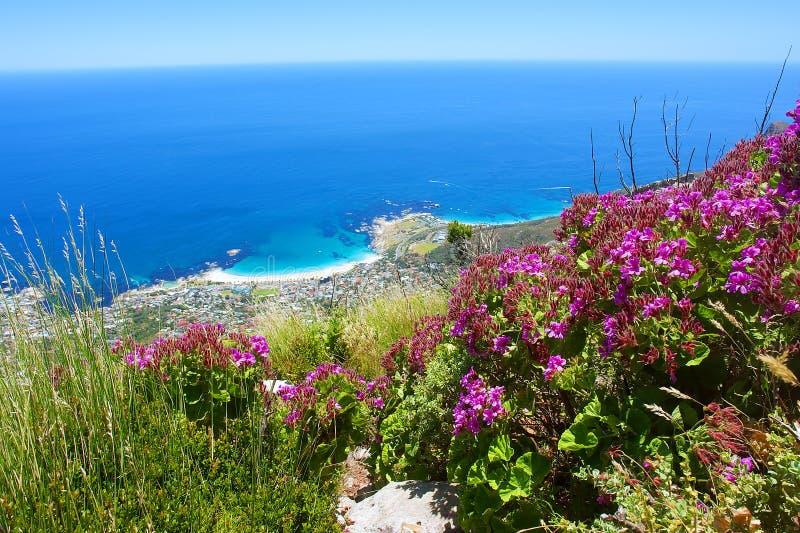 Menchii oka i kwiatów widok przy morzem fotografia royalty free