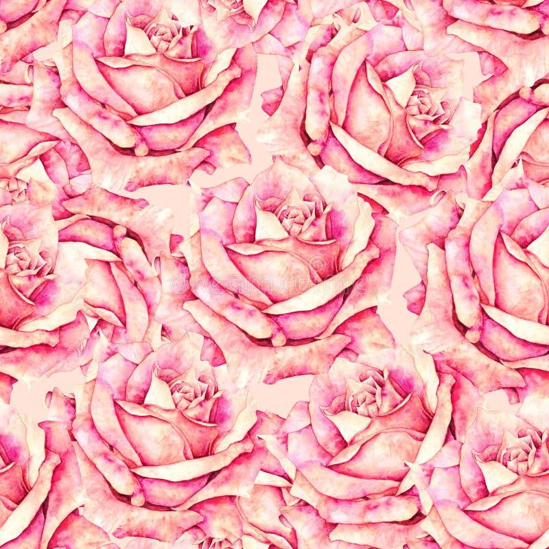 Menchii róża kwitnie bezszwowego wzór w romantycznym stylu dla projekta tkaniny Akwareli handwork ilustracja Rysunkowe róże ilustracja wektor