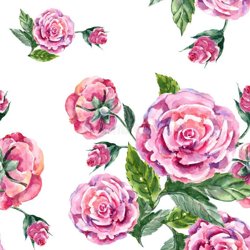 Menchii róża, akwarela, deseniowy bezszwowy ilustracja wektor
