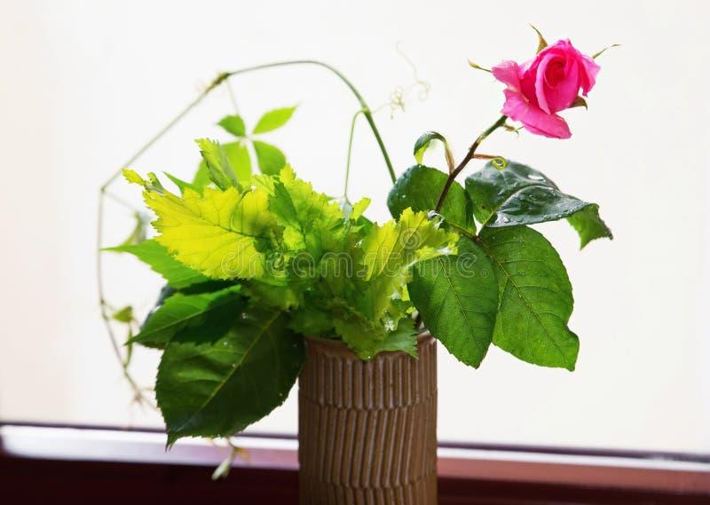 Menchii róża w wazie fotografia stock