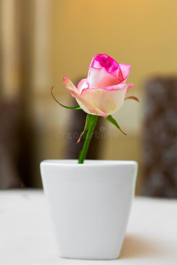 Menchii róża w wazie jako stołowa dekoracja Zgłasza położenie obraz royalty free