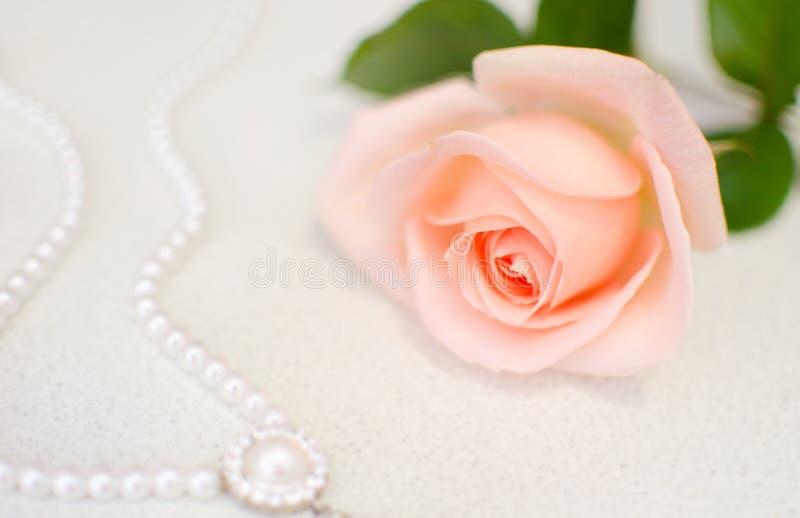 Menchii róża z perl koralikami Selekcyjna ostrość Matki lub walentynki dzień obraz stock