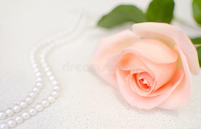 Menchii róża z perl koralikami Selekcyjna ostrość Matki lub walentynki dzień zdjęcie royalty free