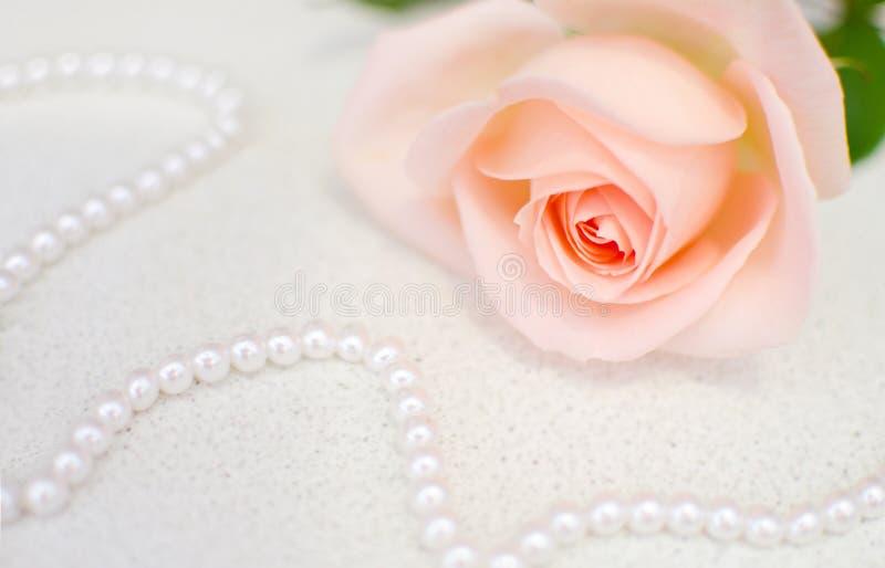 Menchii róża z perl koralikami Selekcyjna ostrość Matki lub walentynki dzień obrazy royalty free